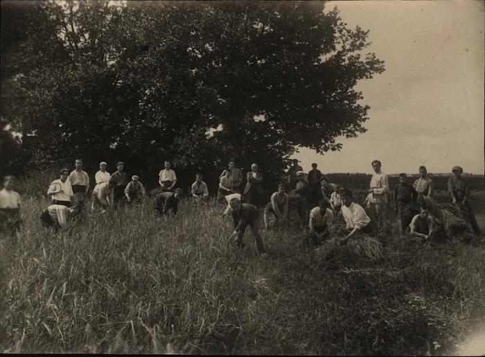 Уборка ячменя, 1923 год.